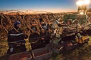 Icewine festival & harvest, Niagara on the Lake, Canada