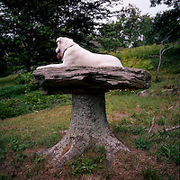 Rescue dog photographed in nature in Maine.