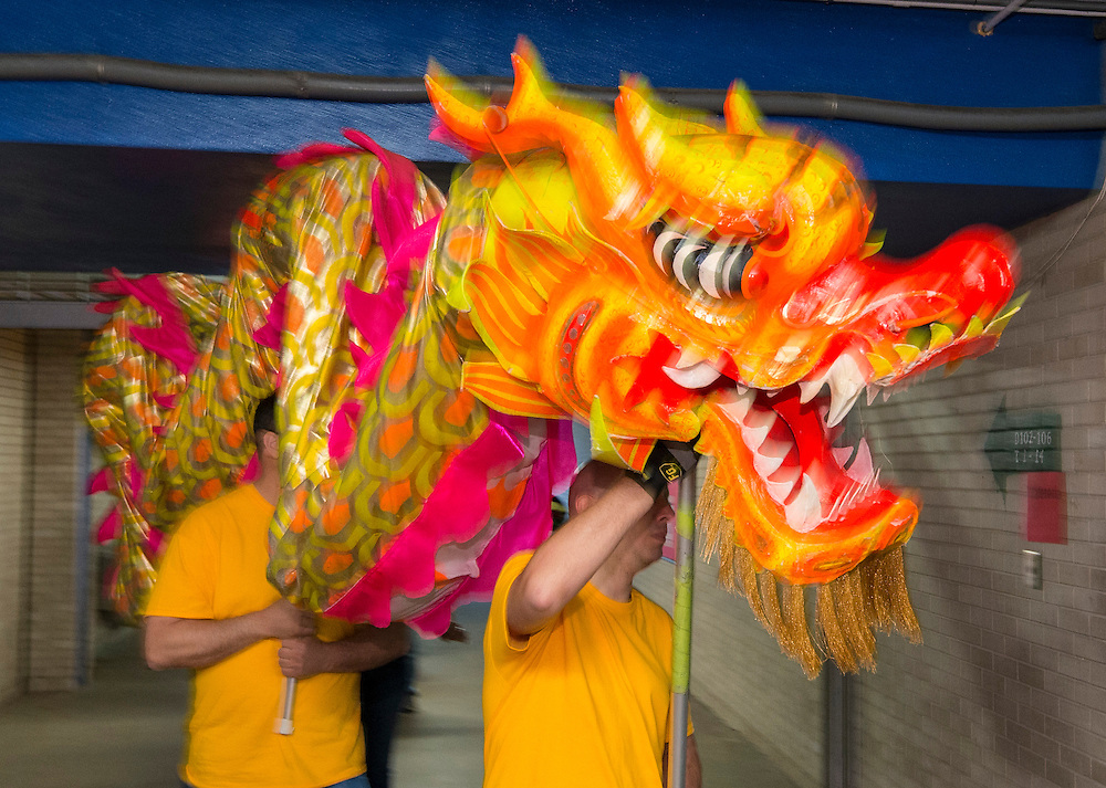 The Mandarin Chinese Emersion School Golden Dragon Dance Team performs during a district wide celebration of the Chinese New Year at Sharpstown International School, February 22, 2014.