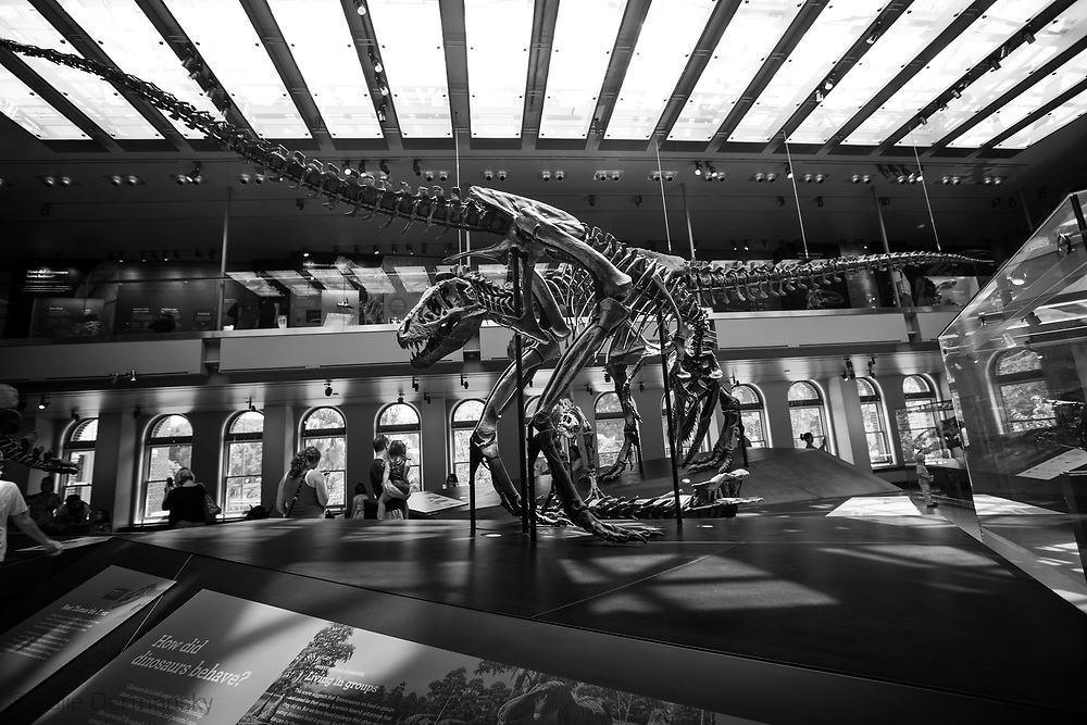 Dinasour skeletons at the  Natural History Museum of Los Angeles County