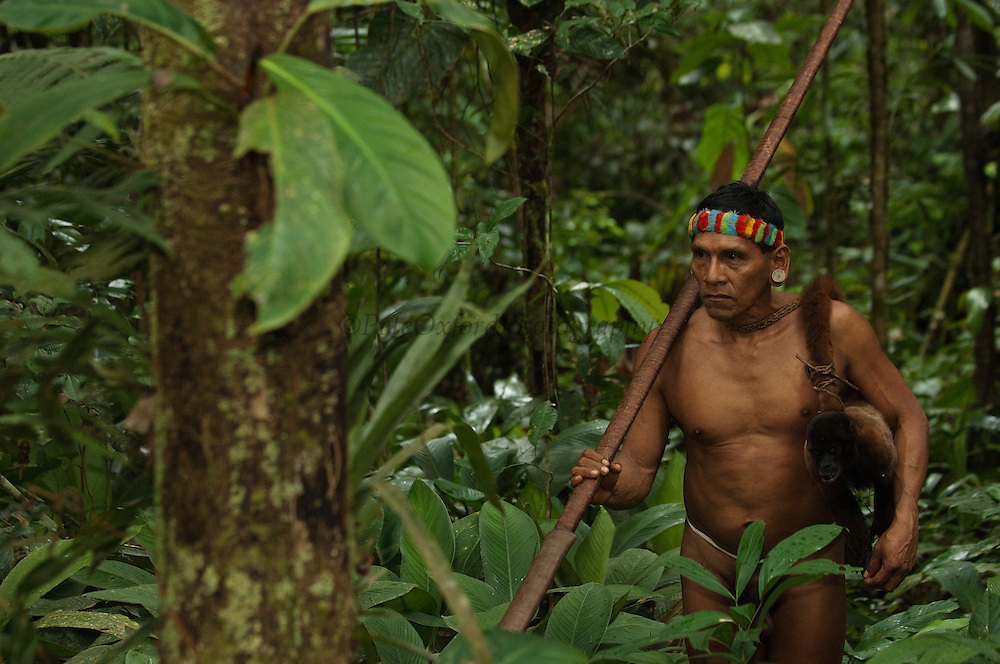 Huaorani Indian - Tage Kaiga hunting. Gabaro Community. Yasuni National Park.<br /> Amazon rainforest, ECUADOR.  South America.<br /> He used his blowgun to shoot this Woolly monkey.<br /> This Indian tribe were basically uncontacted until 1956 when missionaries from the Summer Institute of Linguistics made contact with them. However there are still some groups from the tribe that remain uncontacted.  They are known as the Tagaeri &amp; Taromanani. Traditionally these Indians were very hostile and killed many people who tried to enter into their territory. Their territory is in the Yasuni National Park which is now also being exploited for oil.