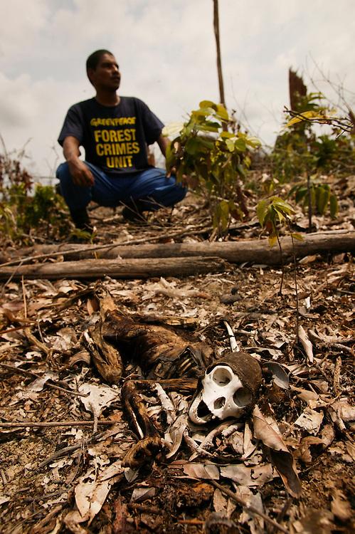November 28th 2003. Porto de Moz (Para state) Brazil. A Howler monkey  (latin: Alouatta sp) is found dead in a burned and deforestated area on public lands in Porto de Moz region.