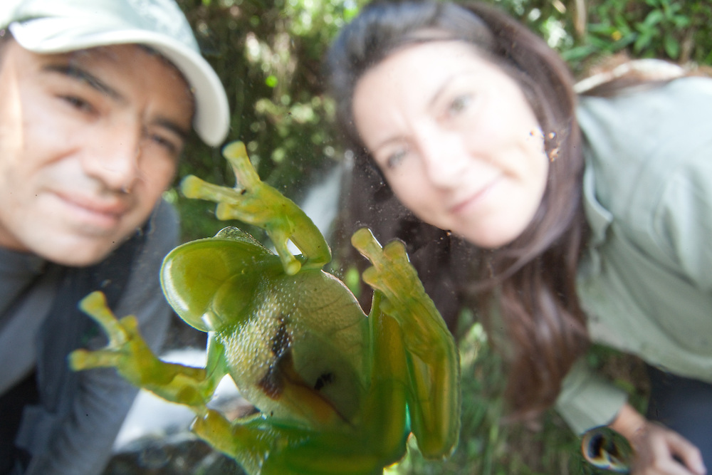 Alonso Quevedo and Lucy Cooke admire a giant glass frog, Centrolene antioquensis, near Sonson in Antioquia, Colombia