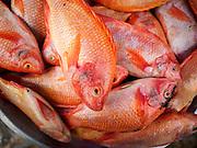 15 JUNE 2105 - NARATHIWAT, NARATHIWAT, THAILAND:  Fish for sale in the market in Narathiwat.      PHOTO BY JACK KURTZ