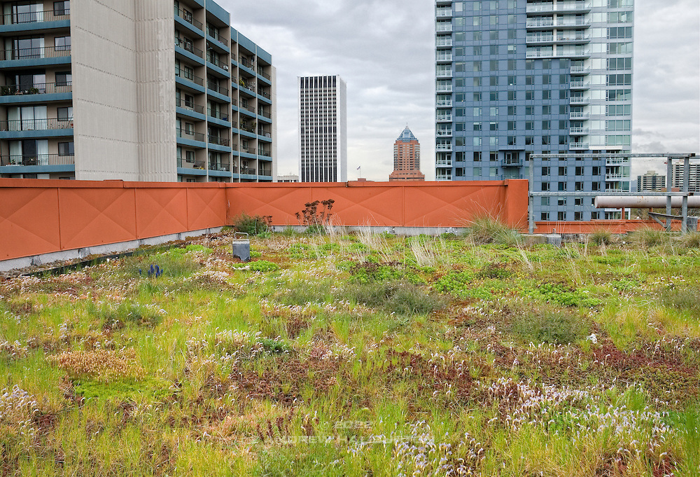 Green Roof at the Hamilton Building; SW 12th Avenue and Clay Street.  The roof is maintained and monitored by City of Portland Bureau of Environmental Services (BES).