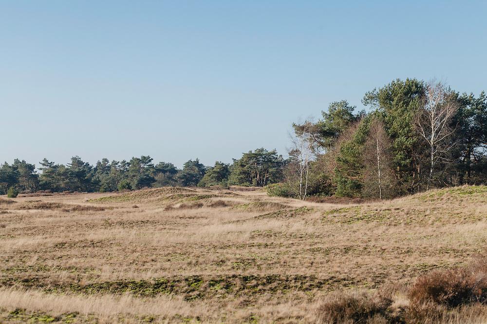 Kootwijkerzand, Kootwijk, Apeldoorn, Gelderland, Netherlands