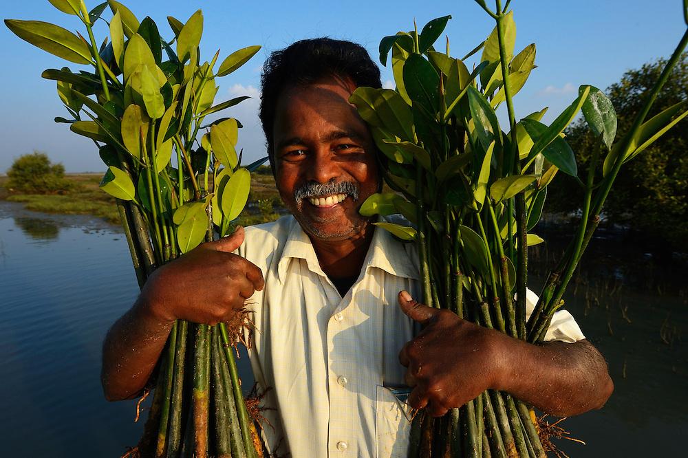 Mangrove planting team from CRINEO planting Rhzophora mangrove trees, Pulicat Lake, Tamil Nadu, India