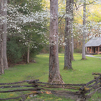 Carter Shields family cabin, with dogwood trees in bloom. Cades Cove, Great Smoky Mountain National Park