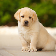 20170823 Burkhardt Lab Puppies