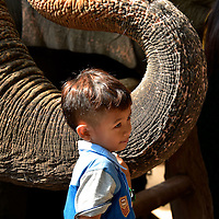Little Boy Holding Elephant Trunk in Hang Chat, Thailand<br />