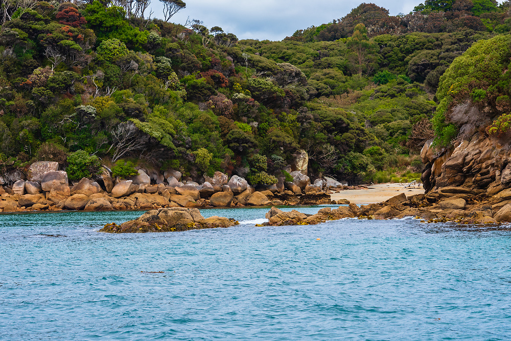 Photo taken from the water shows the colorful trees of Stewart Island, New Zealand