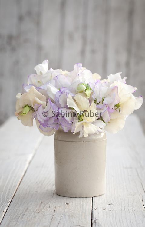 Lathyrus odoratus 'Romeo' and 'Juliet' - sweet pea arrangement in small earthenware jar