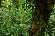 Detail of tropical rainforest in Colon Island. Bocas del Toro, Panama, Central America.
