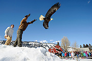 With a crowd of spectators watching, program director Jason Jones, left, and veterinarian Dan Forman release to the wild an adult bald eagle Thursday at the Teton Raptor Center. The bird from Dubois is one of three recently brought to the center for rehabilitation after suffering from lead poisoning.
