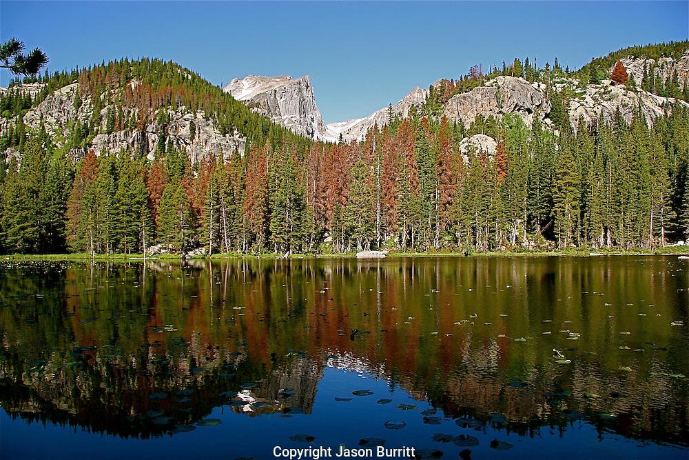 Nymph Lake in Rocky Mountain National Park, Colorado