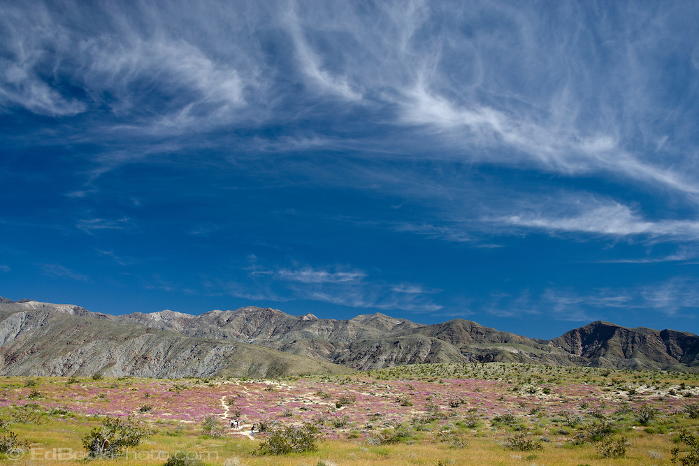 cloud formation above hikers along a trail through San Verbena in Anza-Borrego Desert State Park, California, USA