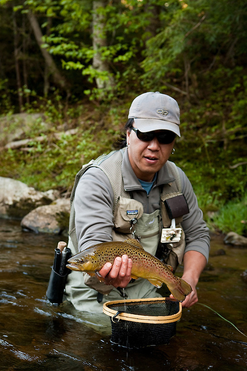 Male angler releases a brown trout while fly fishing on the West Branch of the Ausable River in the Adirondacks, New York State.