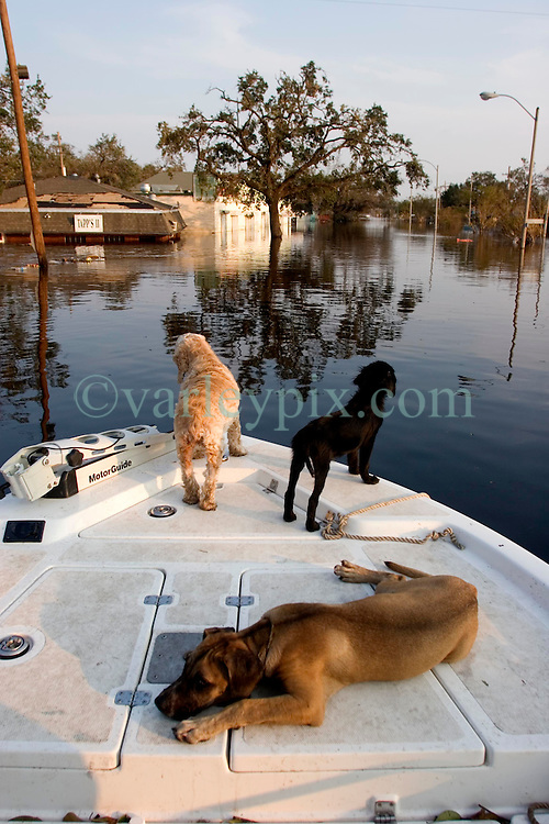05 Sept  2005. New Orleans, Louisiana. Post hurricane Katrina.<br /> Animal rescue boat. Rescued dogs relax on the front of a boat which saved them from the devastating floods in Uptown New Orleans.<br /> Photo; &copy;Charlie Varley/varleypix.com