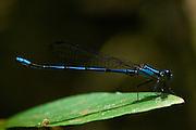 Sao Jose do Rio Preto_SP, Brasil...Programa Biota da Unesp, na foto detalhe de uma libelula...The Biota program of Unesp, in this photo a dragonfly.. .Foto: JOAO MARCOS ROSA /  NITRO