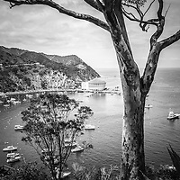 Catalina Island Avalon Bay black and white photo with the Catalina Casino and hillside trees. Picture is high resolution.