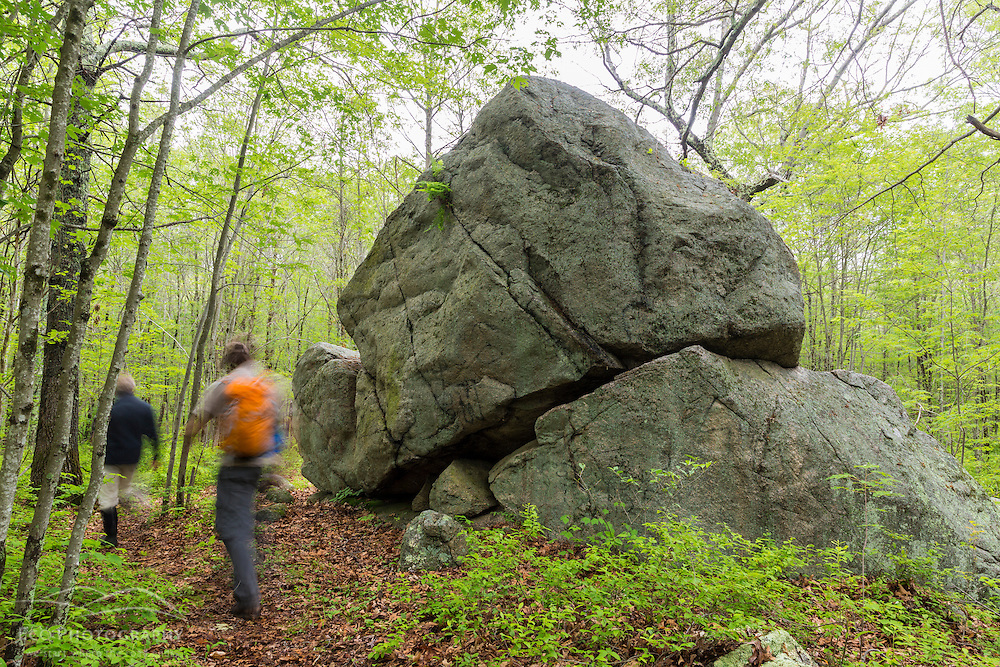 Two men walk past a glacial erratic in the woods at a Wildlands Trust preserve in Brockton, Massachusetts.