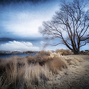 Use keywords to search for more photos like this. Infrared photograph from New Zealand.