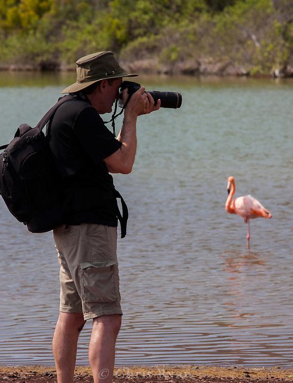 Photographer and Galapagos Flamingo, Galapagos