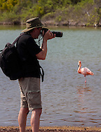 Photographer and Galapagos Flamingo, Galapagos