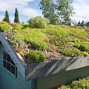 ENVIRONMENTALLY SUSTAINABLE ECO-ROOF MADE FROM LIVE PLANT MATERIAL INCLUDING SEDUM AND SEMPERVIVUM