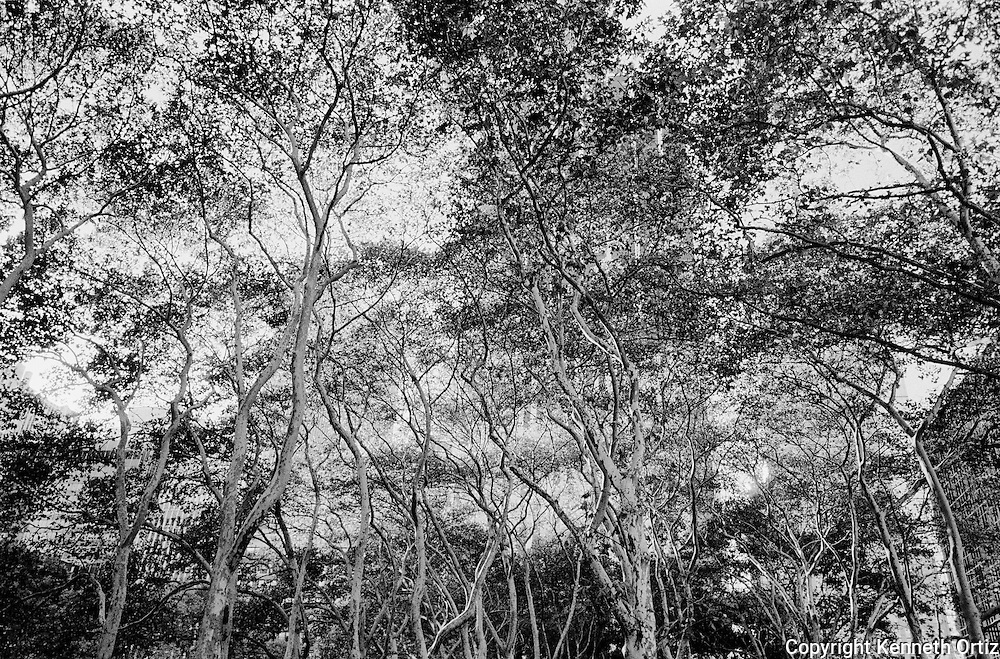 Bryant Park Trees.
