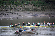 Putney, London,  Tideway Week, Championship Course. River Thames, CUBC, training session with the Chief Coach Steve TRAPMORE,  CUBC Crew, Bow: Ben Ruble – USA, 2: Freddie Davidson, 3: James Letten – USA., 4: Tim Tracey – USA., 5: Aleksander Malowany –CAN., 6: Patrick Eble – USA., 7: Lance Tredell, Stroke: Henry Meek and Cox: Hugo Ramambason – <br /> <br /> Wednesday  29/03/2017<br /> [Mandatory Credit; Credit: Peter Spurrier/Intersport Images.com ]