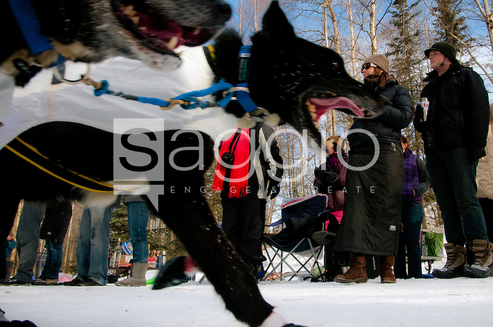 Iditarod fans cheer and watch as the dog teams run along the Chester Creek Trail during the 2011 Iditarod Ceremonial Start.