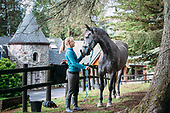 An Sibin Equestrian Centre Best small selection