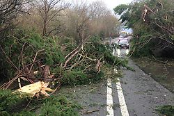 © Licensed to London News Pictures. 12/02/2014. SOMERSET, UK A fallen tree has trapped a man in his lorry cab on the A39 NEAR Bridgwater in Somerset. The man is not seriously injured.  Photo credit : Jason Bryant/LNP