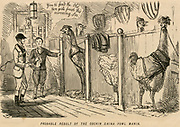 Cartoon  from 'Punch', London, 1853, poking fun at the mania for the new large Cochin-China poultry.
