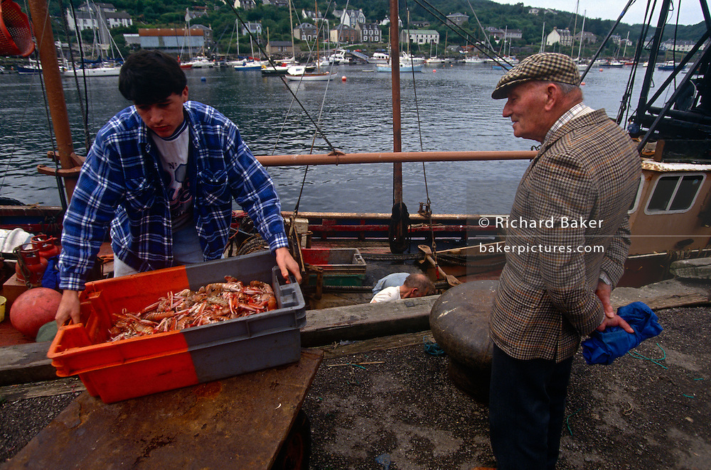 With his home village seen in the background across the bay, a fishermen unloads his catch of Scottish shrimp watched by an elderly gent in at Tarbert, Mull of Kintyre, Argyll & Bute, Scotland UK.. The boxful of freshly-caught shrimp is being landed on the quayside of this quiet community in the western Isles. The trawlerman fishes around the Scottish western isles on the edge of the Atlantic in a well-maintained boat that helps him make his livelihood dependent of fisheries policy and EU quotas that dictate how much they're allowed to catch per day/per week.
