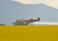 Canola Field Spraying
