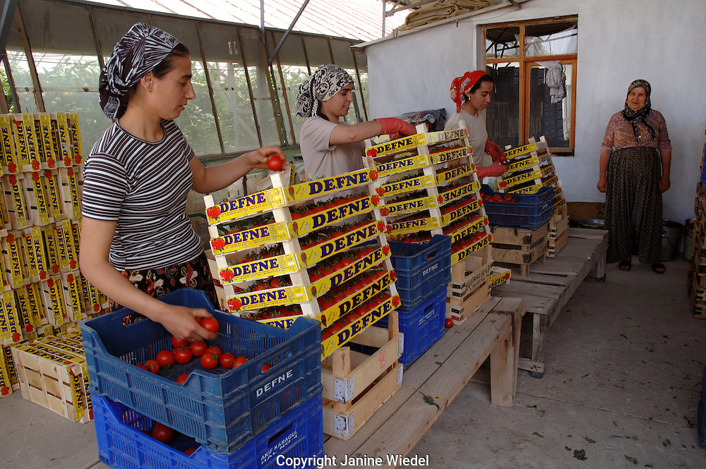 Migrant workers sorting tomatoes in greenhouses in Yesilkoy village in Southern Turkey.