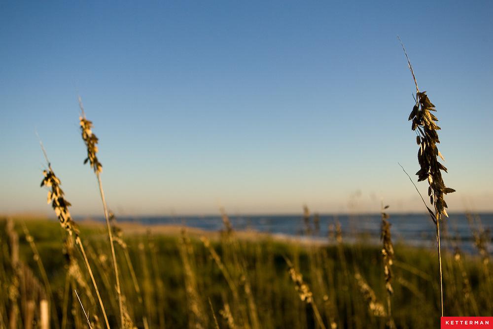 Sawgrass at the beach.