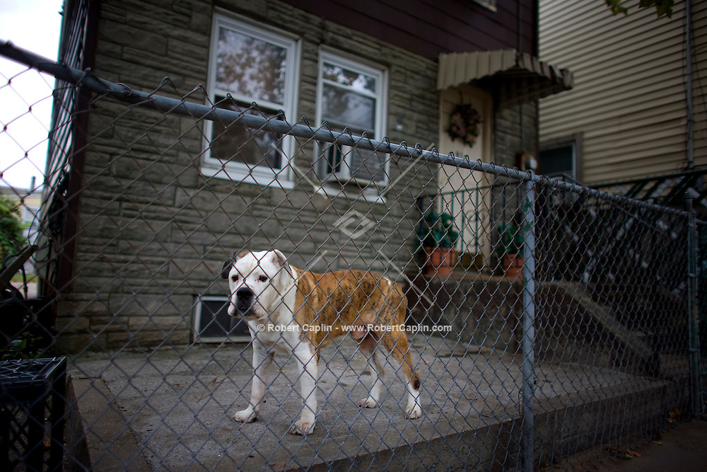 A dog outside a house at 91 Main Street in Newark, NJ on a day in which the American legislative system negotiated a $700 billion bailout plan for the ailing Wall Street financial institutions.