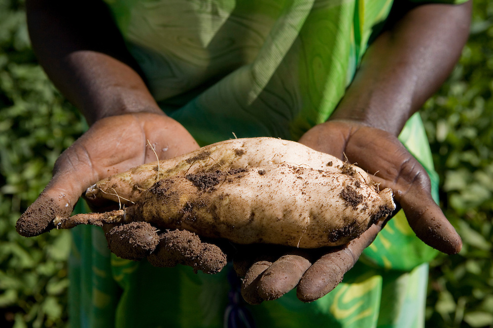 Joyce Nakalembe holding a sweet potato on her brother-in-laws farm in the Nakasongolo district of Uganda.