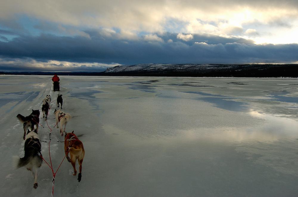 Dog sledding, Dog sledge, Vindelfjallens Nature reserve, Västerbotten, Lapland, Sweden. Ecotourism