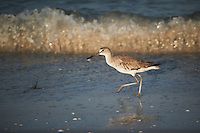 Sandpiper on the Beach at Fort Desoto Park in St. Petersburg, Florida. Image taken with a Nikon D3s and 70-300 mm VR lens (ISO 200, 300 mm, f/5.6, 1/640 sec).