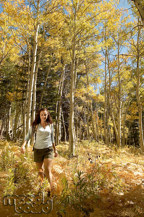 Female hiker in forest