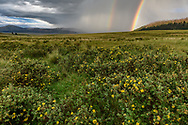 Rainbow at the Valles Caldera National Preserve, featuring the Valle Grande with shrubby cinquefoil in bloom, Jemez Mountains, NM , © 2018 David A. Ponton