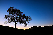 Silhouette of a tree at sunset, Delaware, USA