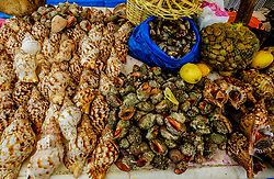 Fish market by the harbour in Essaouira, Morocco<br /> <br /> (c) Andrew Wilson | Edinburgh Elite media