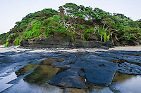 Coastal forest and rocky platforms of Dwesa-Cwebe Marine Protected Area, Eastern Cape, South Africa