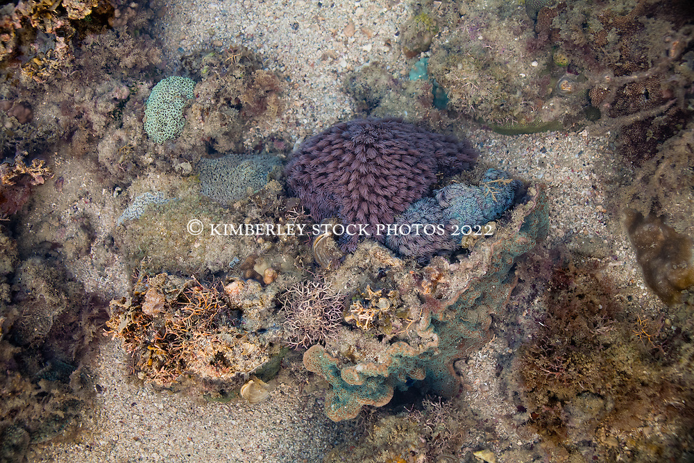 Sponges, corals and anemones in Camden Sound on the Kimberley coast.