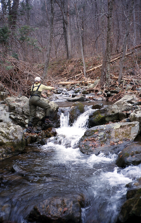 Fly fishing loudoun now for Shenandoah national park fishing